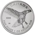 Canada faucon queue rouge 2015