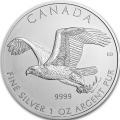 Canada pygargue a tete blanche 2014
