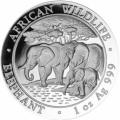 Somalie elephant 2013