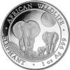Somalie elephant 2014