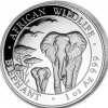 Somalie elephant 2015
